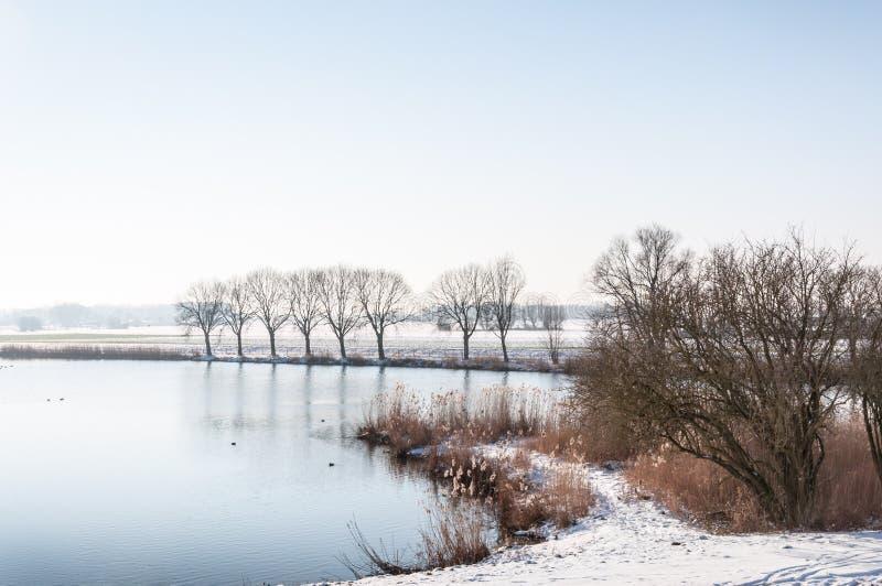 Тростники и деревья вокруг естественного пруда в зиме стоковая фотография rf