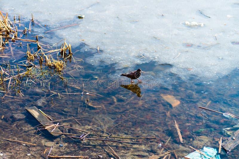 Тростники и отражение в неподвижной воде стоковые фотографии rf