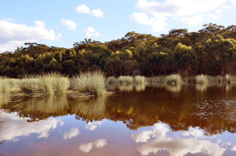 Тростники и отражения облака в озере стоковое фото rf