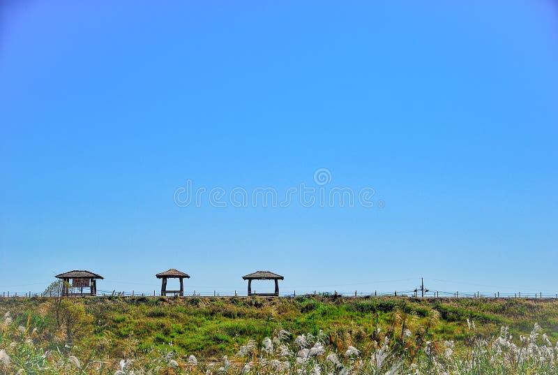 Тростники и 3 павильона стоковые фото