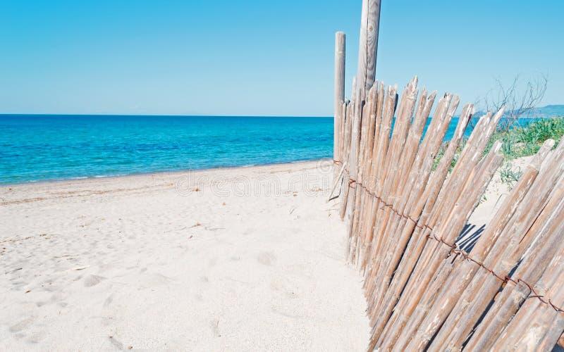 Тростники и песок стоковое фото