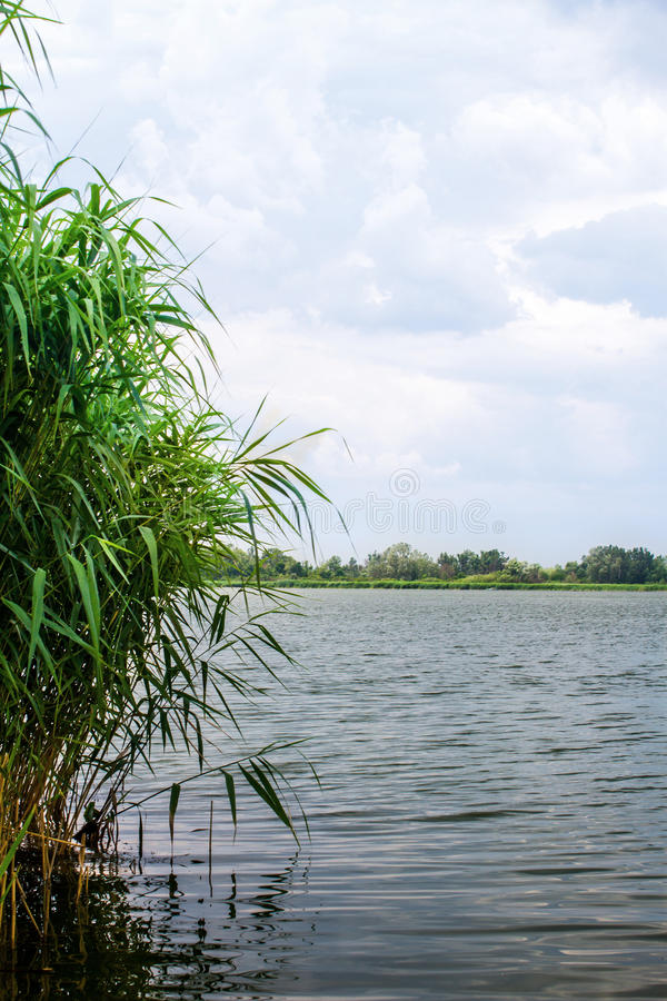 Тростники и стержни реки ландшафта предварительного просмотра стоковое изображение