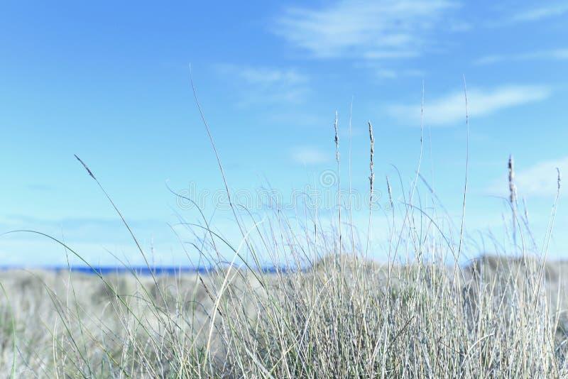 Тростники и дюны пляжа стоковая фотография