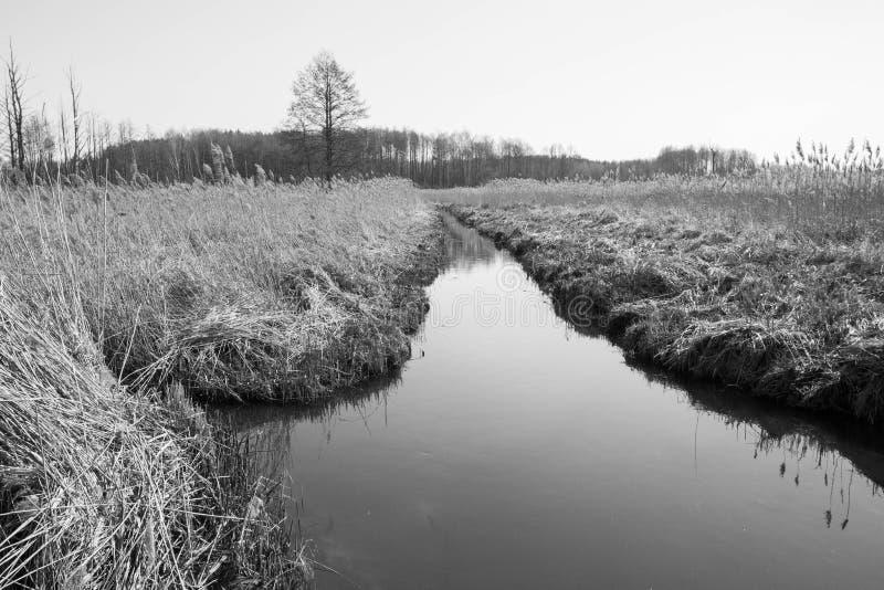 Тростники на береге реки стоковые фотографии rf