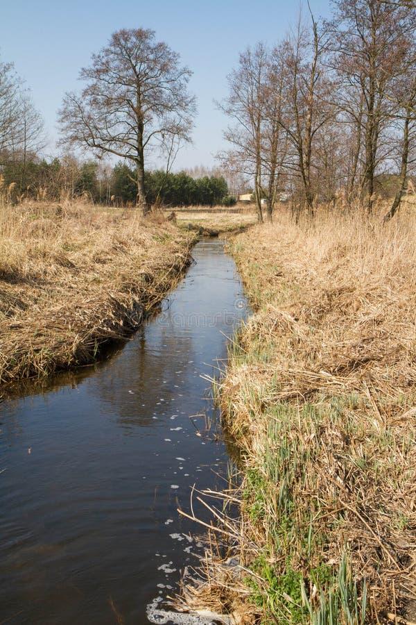 Тростники на береге реки стоковое изображение rf