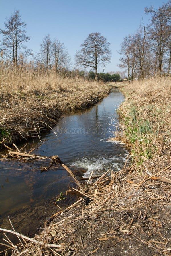 Тростники на береге реки стоковые изображения rf