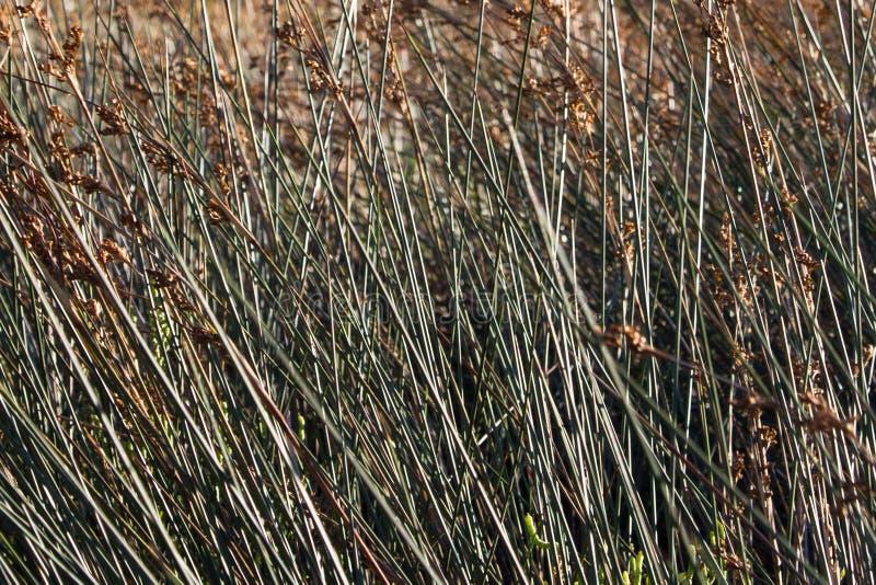 Тростники на береге стоковые фото