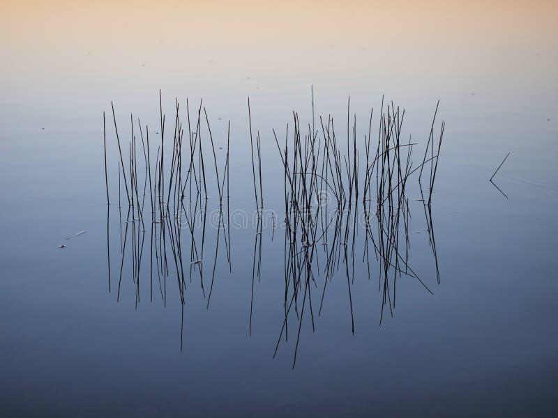 Тростники на восходе солнца в болотистых низменностях национальном парке, Флориде стоковое фото rf