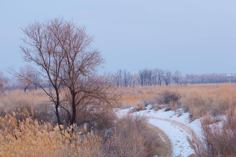 Тростники на замороженном озере, степи река или Казахстан Kap стоковое изображение rf