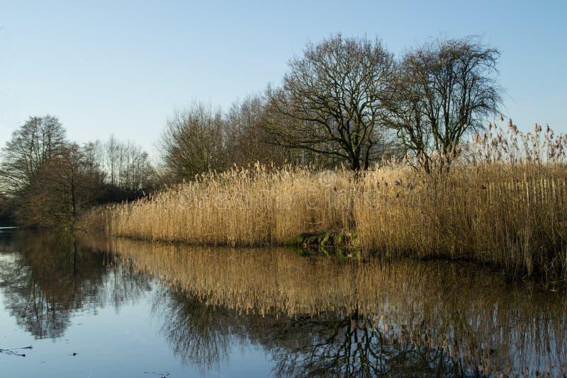 Тростники на канале. стоковая фотография