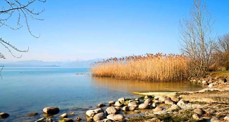 Тростники на озере стоковое фото