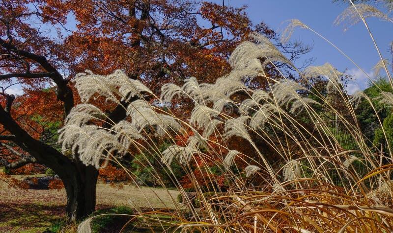 Тростники на парке осени стоковое фото rf