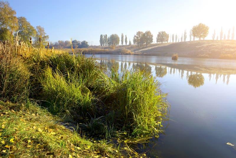 Тростники на реке осени стоковое фото rf