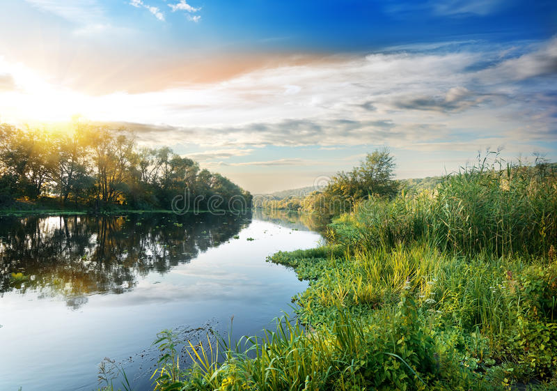 Тростники на реке стоковое изображение rf