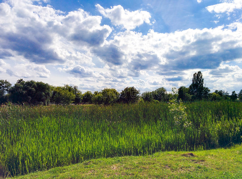 Тростники на речном береге и облачном небе стоковые фотографии rf