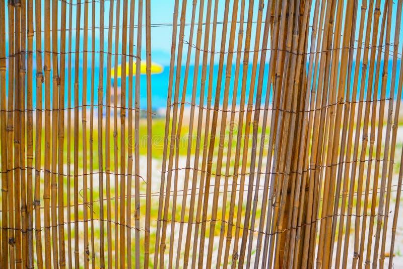Тростники ограждают берегом стоковое фото