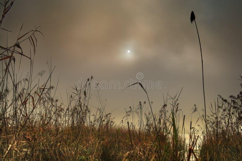 Тростники озера положенные в кожух в туман стоковые изображения
