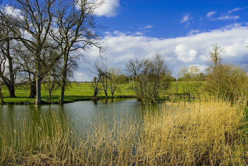 тростники озера стоковое изображение