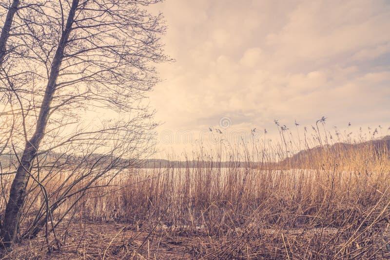 Тростники озером в зиме стоковое изображение