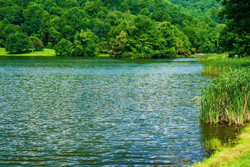 Тростники озером с деревьями на заднем плане на красивый день лет стоковые фотографии rf