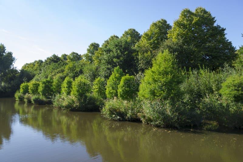 Тростники около канала в парке, Амстердаме, Нидерландах стоковые фото