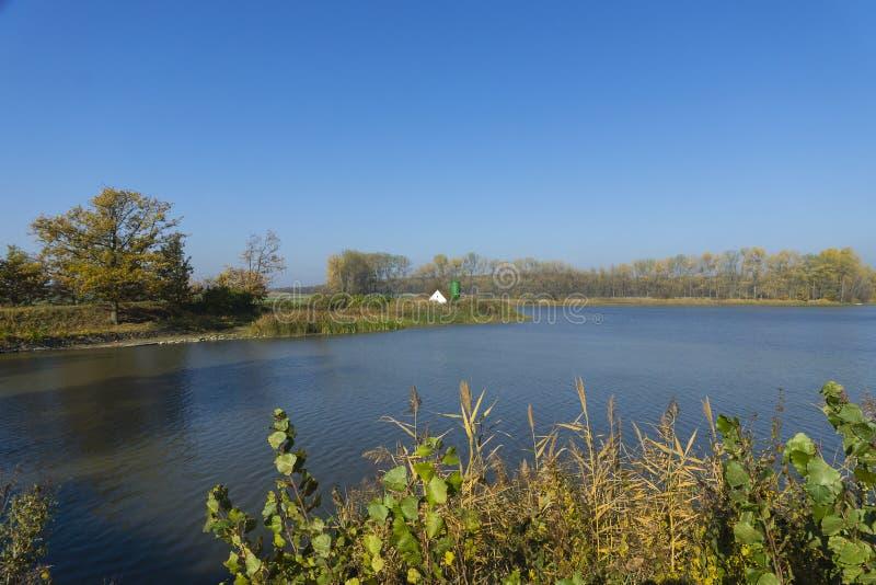Тростники пруда в осени стоковая фотография rf