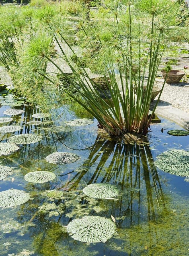 тростники пусковых площадок monets лилии сада стоковые фотографии rf