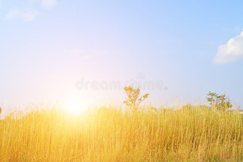 Тростники реки стоковые фото