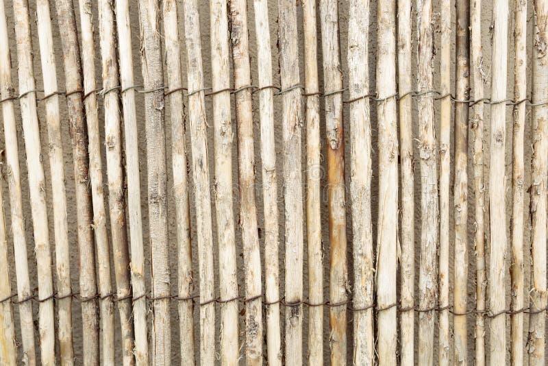 Тростники совместно на стене стоковое изображение rf