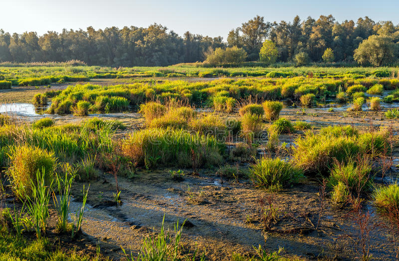 Тростники, спешка и другие дикие растения в болотистом заповеднике стоковые изображения rf