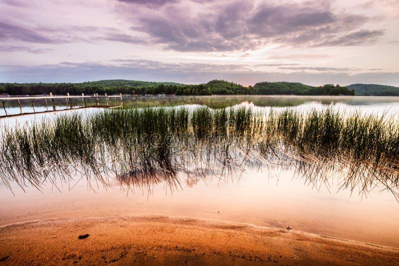 Тростники спокойным пляжем на восходе солнца стоковая фотография