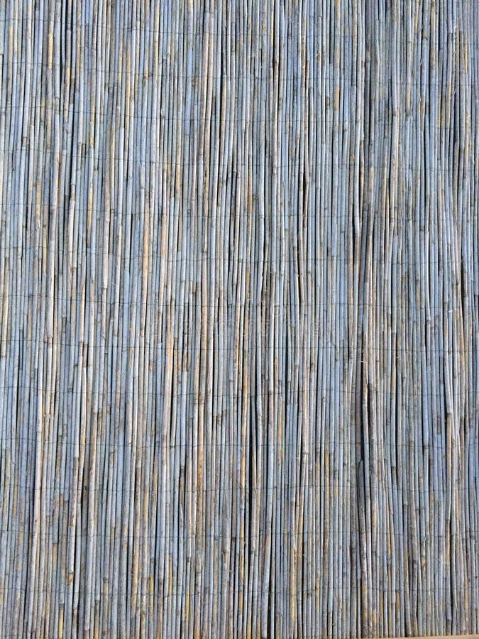 Тростники текстурируют для интересных и творческих предпосылок стоковое фото rf