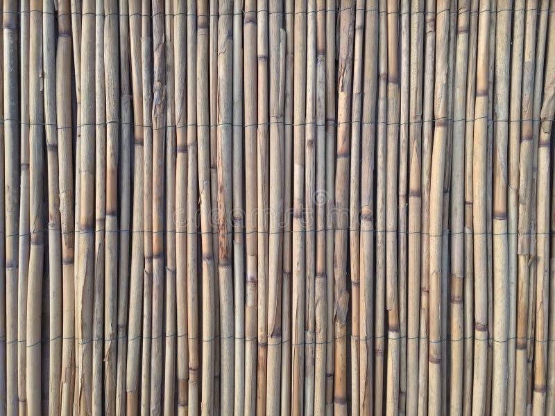 Тростники текстурируют для интересных и творческих предпосылок стоковое изображение rf