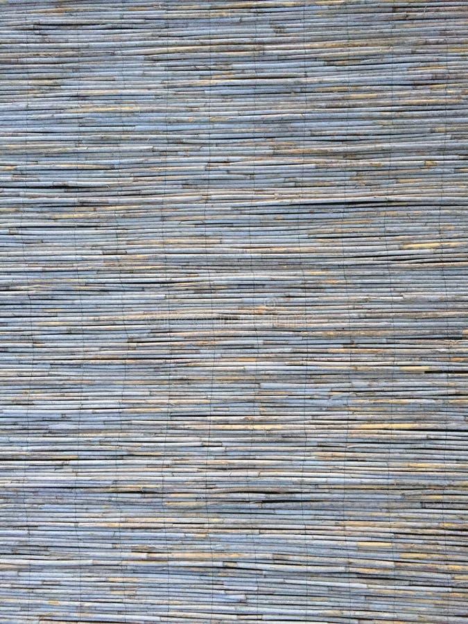 Тростники текстурируют для интересных и творческих предпосылок стоковые фотографии rf