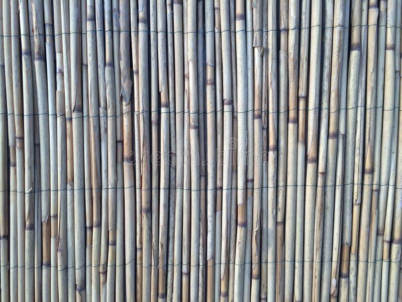 Тростники текстурируют для интересных и творческих предпосылок стоковые изображения rf