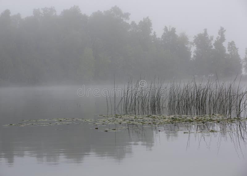 Тростники удлиняя в озеро Минесот стоковое изображение rf