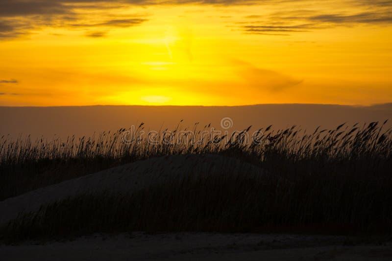 Тростники дюны дуя на заходе солнца стоковые фотографии rf
