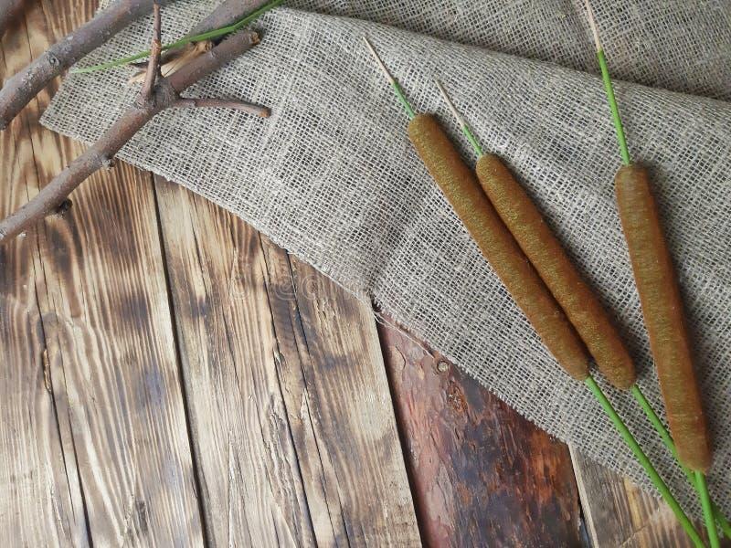 Тростники, bulrush с ветвями на деревянной предпосылке стоковая фотография
