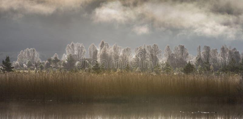 Тростники Mallachie озера & морозные деревья в Шотландии стоковые изображения rf