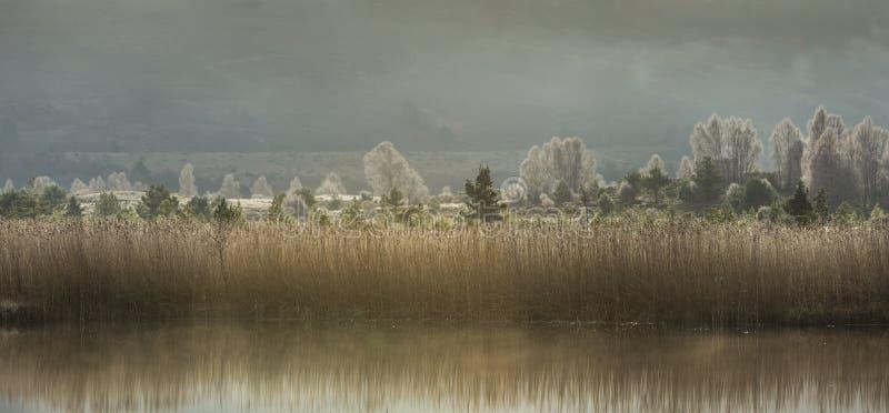 Тростники Mallachie озера & морозные деревья в Шотландии стоковое фото rf