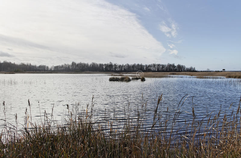 Тростники wiith озера стоковые изображения