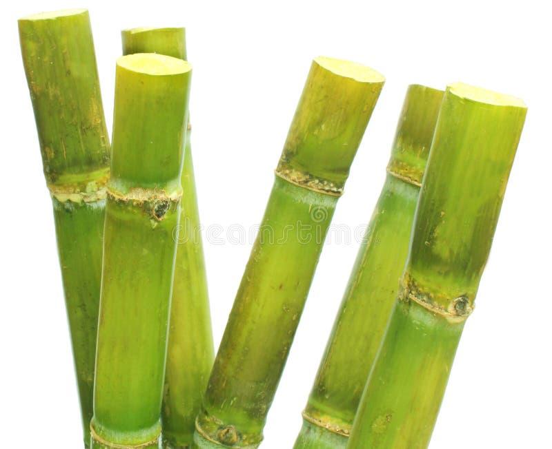 тростниковый сахар стоковая фотография