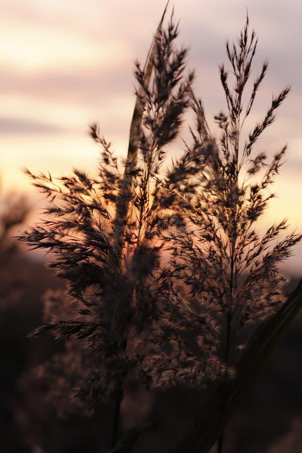 Тросточка в заходе солнца стоковые изображения rf