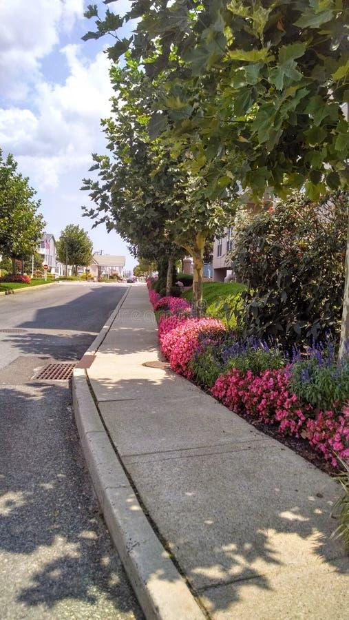 Тротуар с цветками и заводами довольно стоковая фотография rf