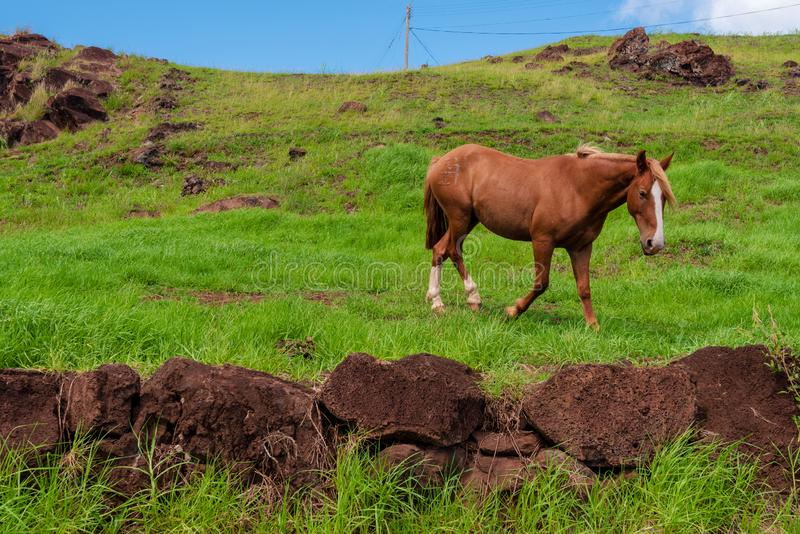 Троты дикой лошади на склоне холма стоковая фотография rf