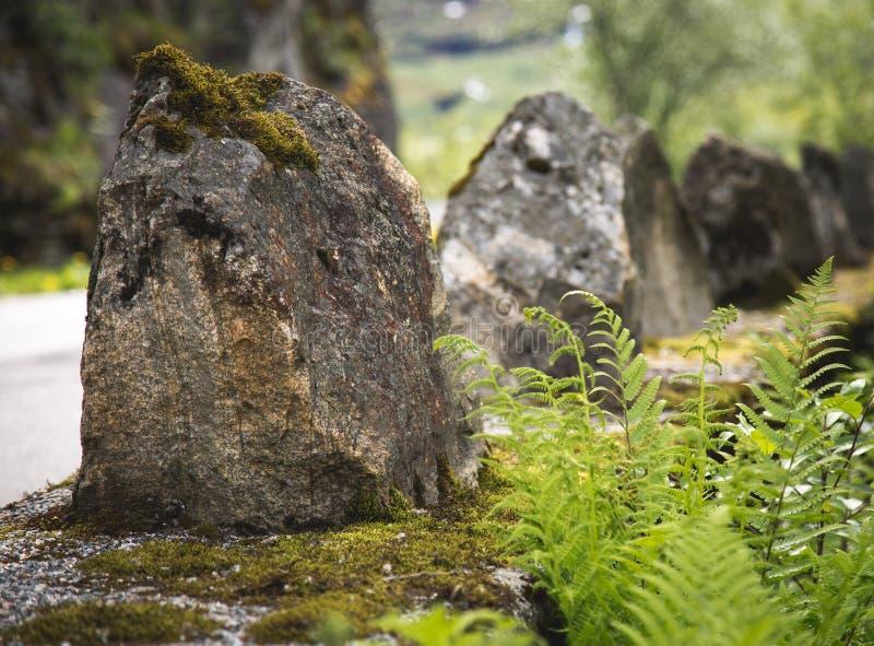 Тролля папоротника растущие близко каменные в Норвегии стоковая фотография