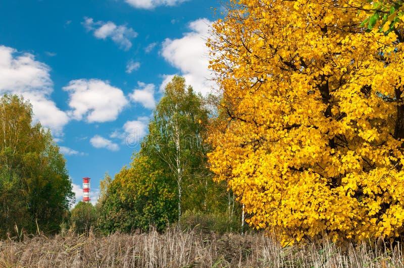 Труба атомной электростанции на предпосылке и деревья в парке стоковое изображение rf