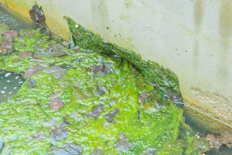 Труба Stormwater весной gutter Clog в сточной канаве стоковое изображение