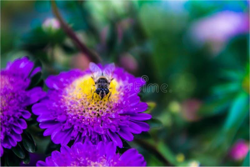 Трудн-работая пчела стоковые изображения