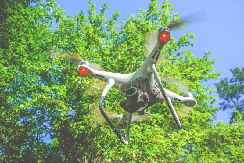 Трутень в летании леса стоковые фото